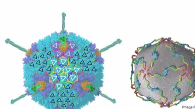 Adenovírusová infekcia
