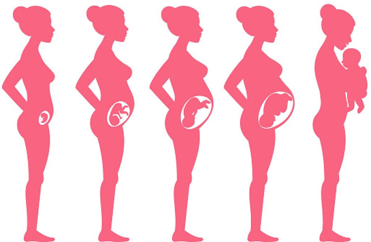Tehotenstvo po týždňoch: Ako prebieha tehotenstvo a vývoj plodu?